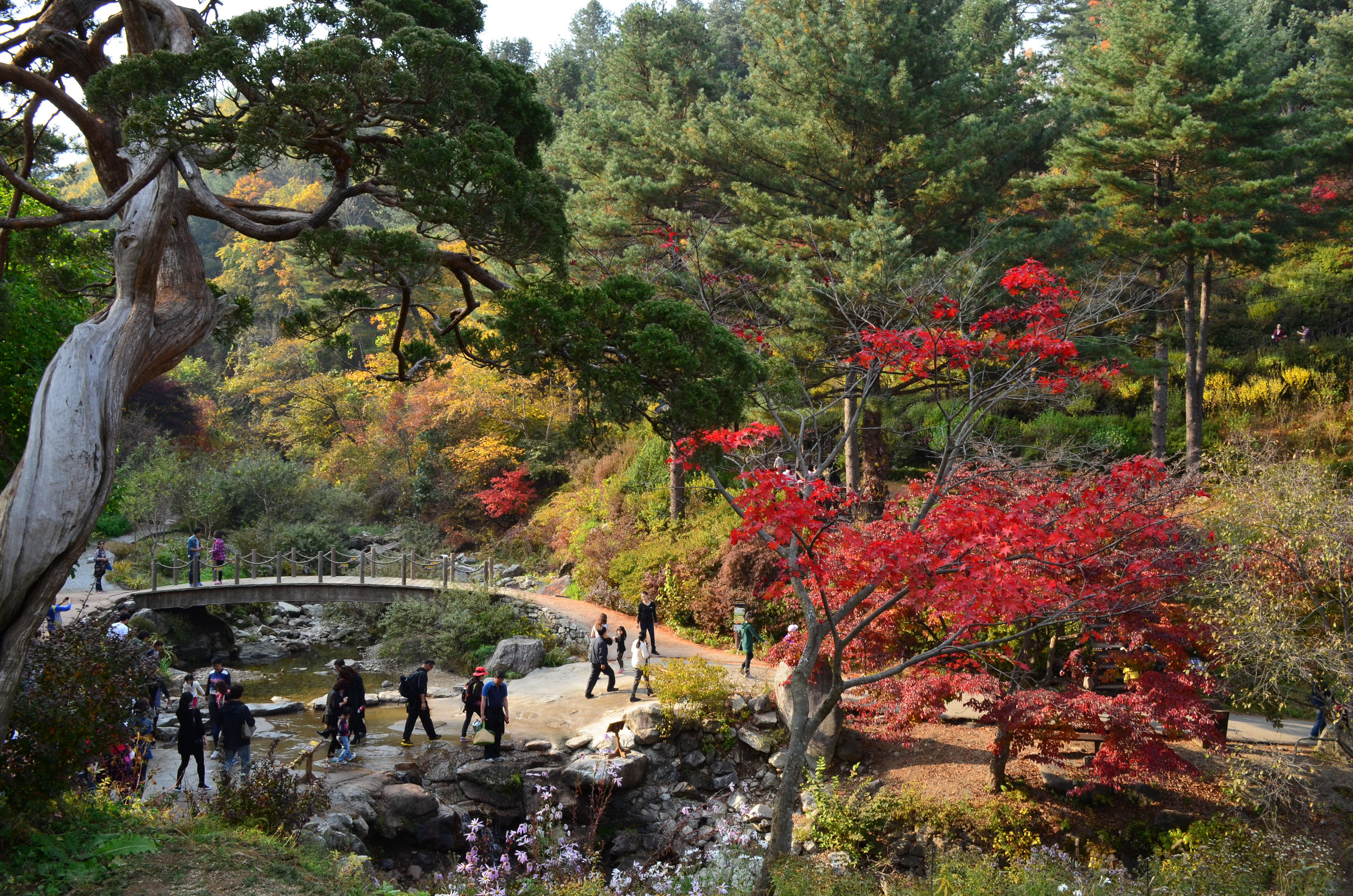 Places I Want To Visit: The Garden of Morning Calm | What\'s New, Korea?
