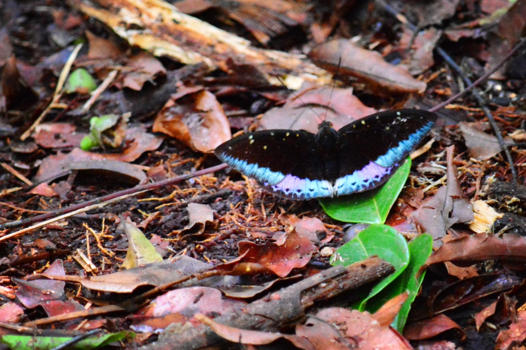 one of the 7 different kind of butterflies we spotted on the trail