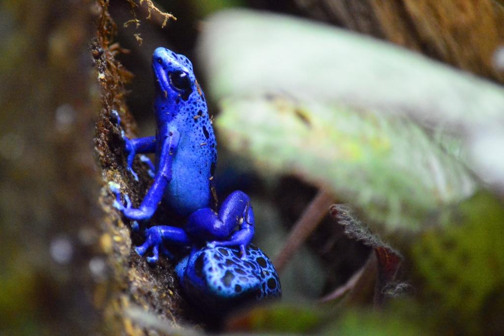 blue frog group